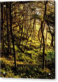 Sunlight On Fern Plants Growing In Acrylic Print by Panoramic Images
