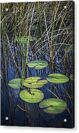 Sunlight On The Lilypads Acrylic Print by Debra and Dave Vanderlaan