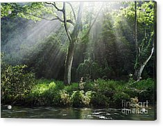 Sunlight Rays Through Trees Acrylic Print by M Swiet Productions