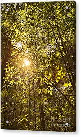 Sunlight Shining Through A Forest Canopy Acrylic Print by Jonathan Welch