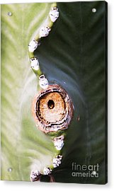 Acrylic Print featuring the photograph Sunlight Split On Cactus Knot by John Wadleigh