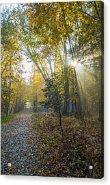 Sunlight Streaming Through The Trees Acrylic Print by Jacques Laurent