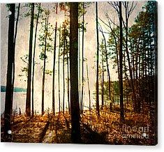 Sunlight Through The Trees Acrylic Print