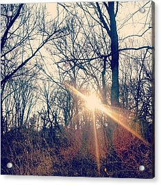 Sunlight Through The Trees Acrylic Print by Genevieve Esson