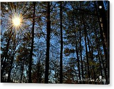 Acrylic Print featuring the photograph Sunlight Through Trees by Tara Potts