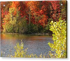 Acrylic Print featuring the photograph Sunlit Autumn by Ann Horn