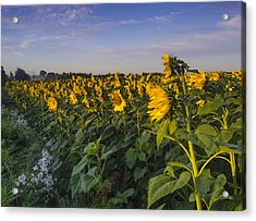 Sunlit Faces Acrylic Print by Thomas Pettengill