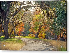 Sunlit Fall Colors Acrylic Print