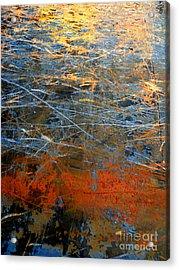 Sunlit Fibers Acrylic Print