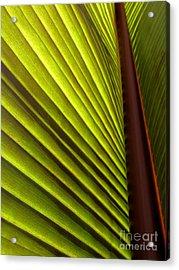 Sunlit Leaf Acrylic Print