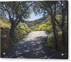 Sunlit Road Acrylic Print by Maralyn Miller