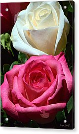Sunlit Roses Acrylic Print by Marie Hicks