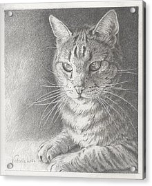 Sunlit Tabby Cat Acrylic Print