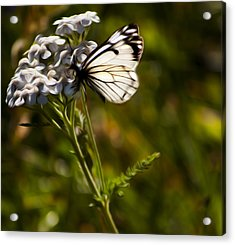 Acrylic Print featuring the digital art Sunlit Wings by Timothy Hack