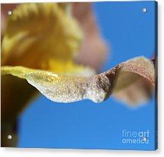 Sunlit Wonder Acrylic Print