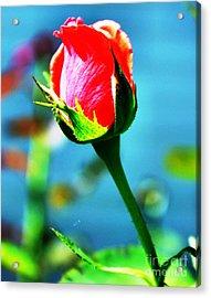 Sunlite Rose Bud Acrylic Print by Judy Palkimas