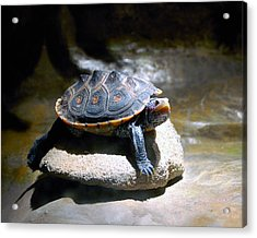 Acrylic Print featuring the photograph Sunning Terrapin by Donna Proctor