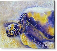 Sunning Turtle Acrylic Print by Carolyn Jarvis