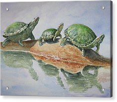 Sunning Turtles Acrylic Print