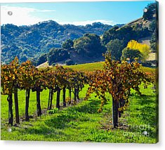 Sunny Autumn Vineyards Acrylic Print by CML Brown