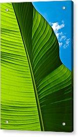 Sunny Banana Leaf Acrylic Print
