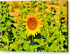 Sunny Acrylic Print by BandC  Photography