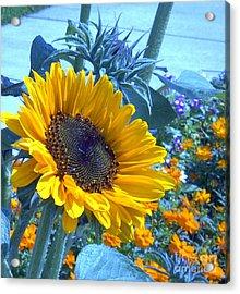 Sunny Blue Acrylic Print by Arlene Carmel