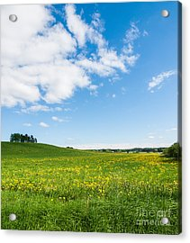Sunny Day At The Fields Of Gold Acrylic Print