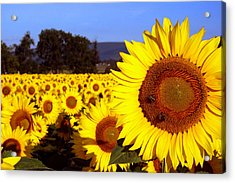 Sunny Day II Acrylic Print by Meaghan Troup