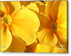 Sunny Disposition Acrylic Print by Chris Anderson