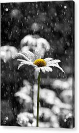 Sunny Disposition Despite Showers Acrylic Print
