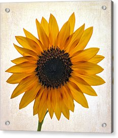 Sunny Disposition Acrylic Print by Tammy Espino