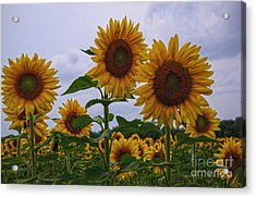 Acrylic Print featuring the photograph Sunny Faces by Debra Fedchin