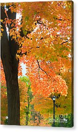 Sunny Fall Day By David Lawrence Acrylic Print