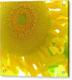 Sunny Flower Acrylic Print by Marcia Nichols