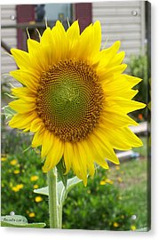 Bright Sunflower Happiness Acrylic Print by Belinda Lee