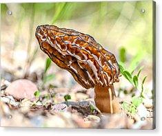 Sunny Morel Acrylic Print