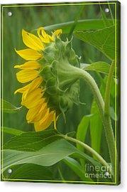 Sunny Profile Acrylic Print