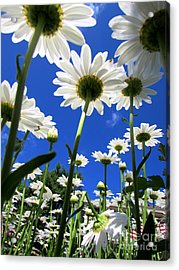 Sunny Side Up Acrylic Print by Pamela Clements