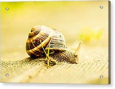 Sunny Snail Acrylic Print by Daniel Daniel