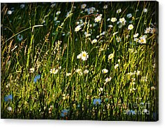 Acrylic Print featuring the photograph Sunny Spot by Mindy Bench