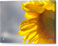 Acrylic Print featuring the photograph Sunny Sunflower by Cheryl Baxter