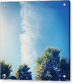 Palms And Clear Skies Acrylic Print