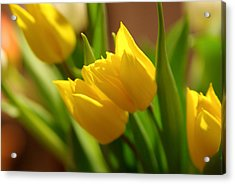 Acrylic Print featuring the photograph Sunny Tulips by Erin Kohlenberg