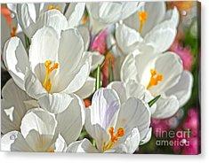 Sunny White Flowers Acrylic Print by Nur Roy