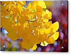 Sunny Yellow Ginkgo Acrylic Print by Rita Mueller