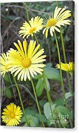 Sunny Yellow Acrylic Print