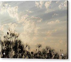 Sunrays Above Papyrus Plants, Okavango Acrylic Print