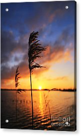 Sunrise @ The Lake Acrylic Print by LHJB Photography