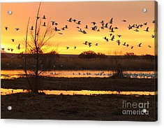 Acrylic Print featuring the photograph Sunrise And Geese by Ruth Jolly